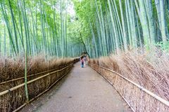 The Arashiyama Bamboo Grove of Kyoto in Japan. Wide angle of the Arashiyama Bamboo Grove of Kyoto with blurred tourists in Japan Royalty Free Stock Image