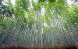 The Arashiyama Bamboo Grove of Kyoto, Japan. Stock Images