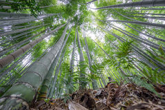 The Arashiyama Bamboo Grove of Kyoto, Japan. Royalty Free Stock Image