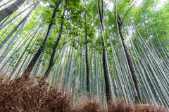The Arashiyama Bamboo Grove of Kyoto, Japan. Stock Photo
