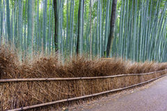 The Arashiyama Bamboo Grove of Kyoto, Japan. Royalty Free Stock Images