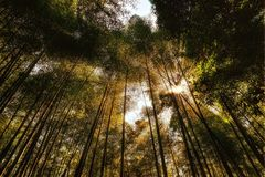 Arashiyama Bamboo Grove Kyoto. Taken in 2011 Royalty Free Stock Photo