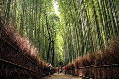 The Arashiyama Bamboo Grove, kyoto, kansai, Japan stock images