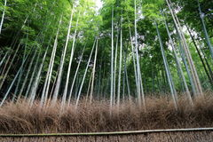 Arashiyama Bamboo Grove 2 Royalty Free Stock Photography