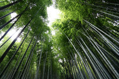 Arashiyama Bamboo Grove 4 Stock Photos