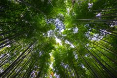 Arashiyama bamboo grove in Kyoto, Japan. Arashiyama bamboo grove at spring time in Kyoto, Japan. On CNN, Arashiyama was referred to as one of the most beautiful Stock Photos