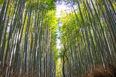 Arashiyama Bamboo grove on sunshine background in Kyoto, Japan.  Stock Images