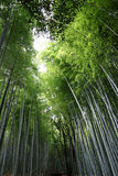 Arashiyama Bamboo Grove 3 Royalty Free Stock Photo