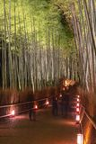 Arashiyama Bamboo Grove Zen garden light up at night. A natural forest of bamboo in Arashiyama, Kyoto, Japan royalty free stock image
