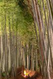 Arashiyama Bamboo Grove Zen garden light up at night royalty free stock photography
