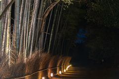 Arashiyama Bamboo Grove Zen garden light up at night royalty free stock images