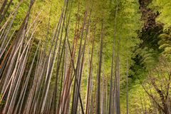 Arashiyama Bamboo Grove Zen garden light up at night stock photo