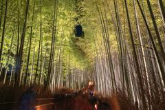 Arashiyama Bamboo Grove Zen garden light up at night stock photography