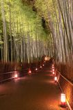Arashiyama Bamboo Grove Zen garden light up at night royalty free stock photo
