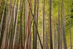 Arashiyama Bamboo Grove Zen garden light up at night royalty free stock image