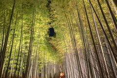 Arashiyama Bamboo Grove Zen garden light up at night. A natural forest of bamboo in Arashiyama, Kyoto, Japan royalty free stock images