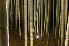 Arashiyama Bamboo Grove Zen garden light up at night. A natural forest of bamboo in Arashiyama, Kyoto, Japan royalty free stock photography
