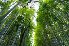 Arashiyama Bamboo Grove Zen garden, a natural forest of bamboo in Arashiyama, Kyoto. Japan stock photo