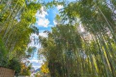 Arashiyama Bamboo Grove Zen garden, a natural forest of bamboo in Arashiyama, Kyoto. Japan royalty free stock photos
