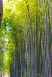 Arashiyama Bamboo Grove Zen garden, a natural forest of bamboo in Arashiyama, Kyoto stock photos