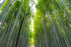 Arashiyama Bamboo Grove Zen garden, a natural forest of bamboo in Arashiyama, Kyoto stock images