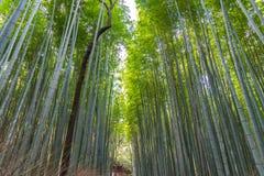 Arashiyama Bamboo Grove Zen garden, a natural forest of bamboo in Arashiyama, Kyoto royalty free stock photos