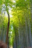 Arashiyama Bamboo Grove Zen garden, a natural forest of bamboo in Arashiyama, Kyoto. Japan stock image