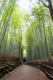 Arashiyama Bamboo Path, Japan Royalty Free Stock Photos