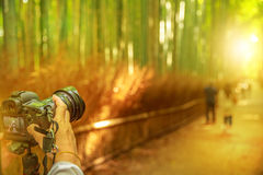 Arashiyama bamboo photographer. Close up of professional camera photographing tourists in bamboo grove at sunset in Arashiyama. Kyoto forest is the second most Stock Images