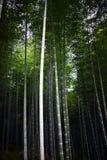 Arashiyama bambu Royaltyfria Bilder