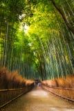 Arashiyama bambudunge fotografering för bildbyråer