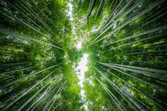 Arashiyama bambudunge Arkivfoton