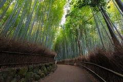 Arashiyama bambudunge av bambuskogen i Kyoto, Japan Royaltyfria Bilder
