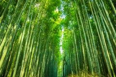 Arashiyama bambudunge arkivbild