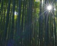Arashiyama bambusa gaj Fotografia Royalty Free