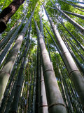 Arashiyama bambusa las Obraz Stock