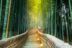 Arashiyama bambusa las Fotografia Stock