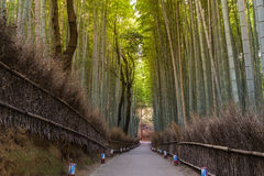 Arashiyama bambusa las Obrazy Royalty Free