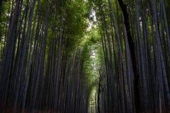 Arashiyama bambusa las Zdjęcie Royalty Free