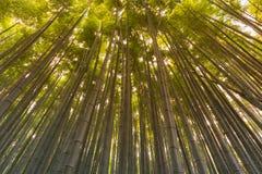 Arashiyama bambusowy las, bambusowy las Fotografia Stock