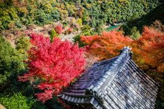 Arashiyama. Colorful of maple forest on the mountain at autumn season in Arashiyama, Kyoto, Japan. From observation view point at Senkoji temple, over hozu river stock photos