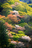 Arashiyama, colorful spring trees on mountain. In Kyoto, Japan Royalty Free Stock Photos