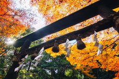 Arashiyama is Autumn season late november and colorful Leaf such. Arashiyama is a district on the western outskirts of Kyoto, Japan. It also refers to the Royalty Free Stock Photography