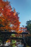 Arashiyama is Autumn season late november and colorful Leaf such. Arashiyama is a district on the western outskirts of Kyoto, Japan. It also refers to the Stock Photography