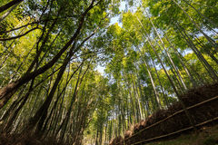 Arashiyama Royalty Free Stock Photography