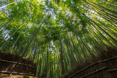 Arashiyama Royalty Free Stock Images