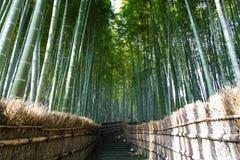 Arashiyama gaju bambusowy las w Kyoto, Japonia fotografia royalty free