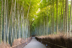 Arashiyama green bamboo forest and walking way Stock Photo