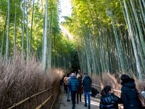 Tourist walking in Bamboo Forest stock photos