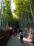 Tourist walking in Bamboo Forest royalty free stock photo